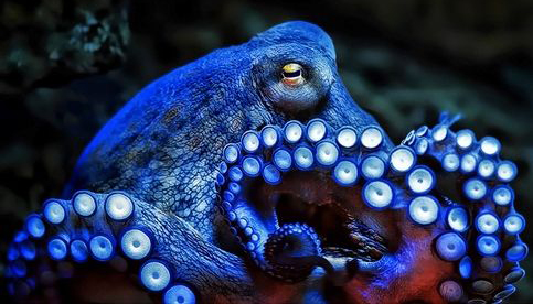 art-octopus-animal-voices-vancouver
