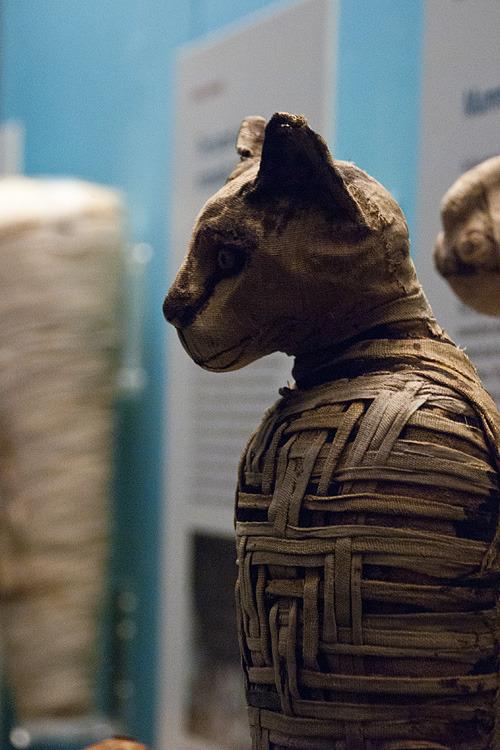 blog-art-egypt-cat-mummy-bodyjpg